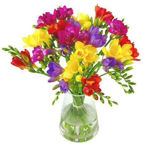 Empty Vase Florist Scented Freesia Send Fresh Freesias Free Uk Delivery