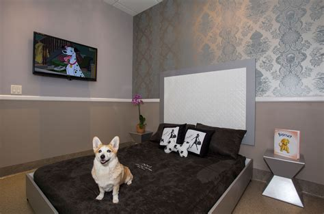 puppy hotel luxury pet hotel welcome to posh pet hotel