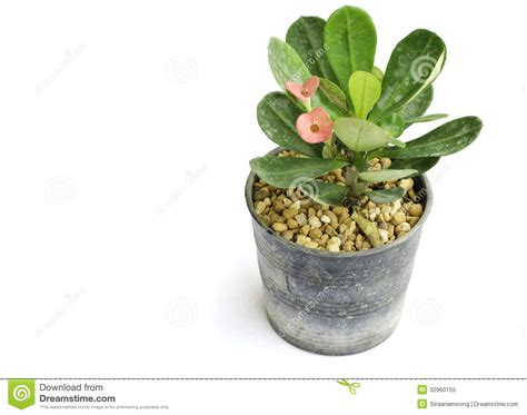 small flower pot small flower pot royalty free stock photo image 32960155