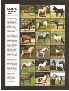 foal color calculator 1000 images about horses on coats arabian