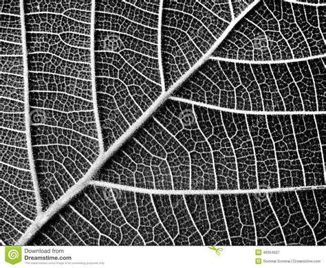 texture pattern black and white black and white leaf texture stock image image of leaf