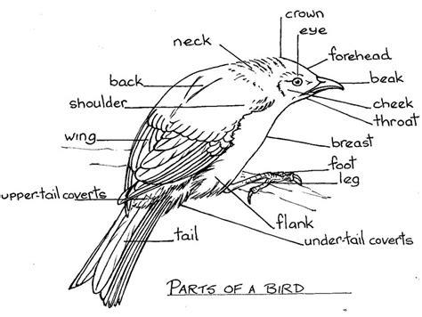 parts of birds beak images
