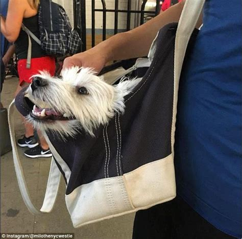 buy a puppy nyc new york subway riders find ingenious ways bring their dogs with them on the