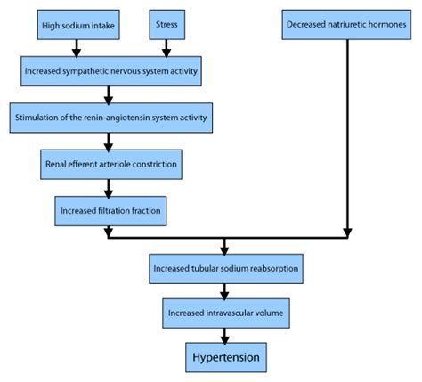 pathophysiology of hypertension flowchart student faculty responses