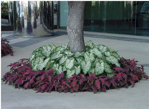 flower bed around tree 17 best ideas about landscaping around trees on pinterest