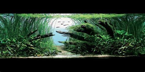 Aquarium Design Usa | 8 best images about aquarium on pinterest trees the