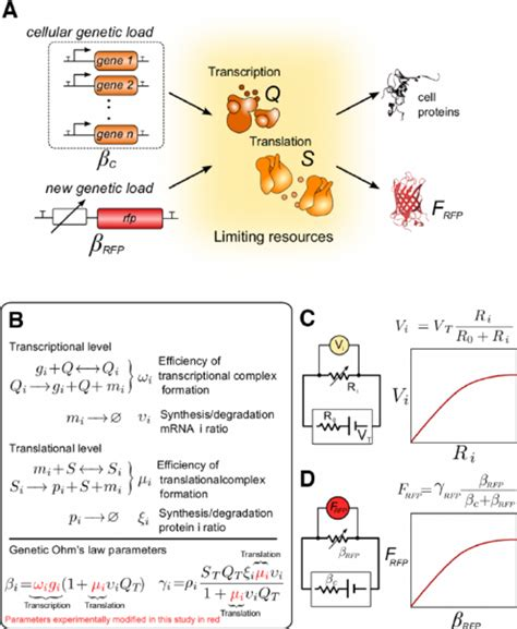 biological electrical resistor the biology of the mathematical model and its connections with the