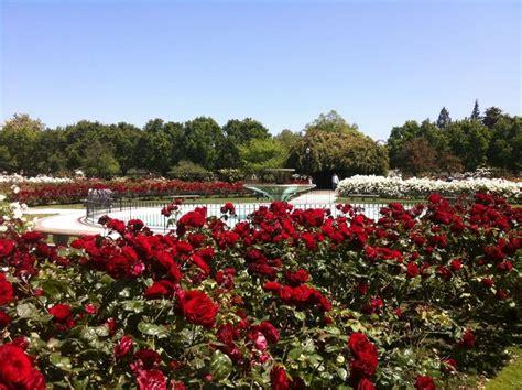 san jose municipal rose garden yelp