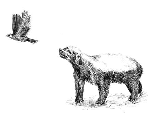 Animal Canvas Pencil animals pencil illustrations on pantone canvas gallery