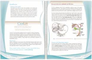 book page layout templates canliv projects
