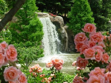 beautiful waterfalls with flowers pretty waterfalls with flowers www imgkid com the image kid has it