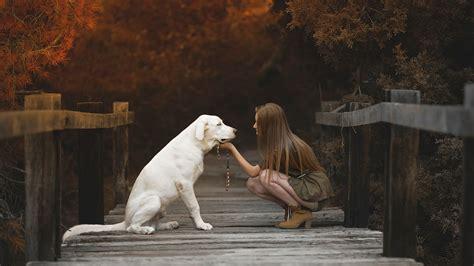 wallpaper girl dog nature labrador retriever wooden surface dog animals