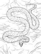 plains garter snake coloring page free printable