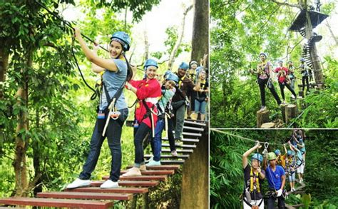 milly s jungle adventures the jungle talent show books chiang mai day tours one day zipline and elephant tour