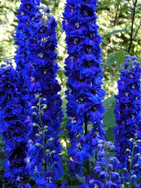 Blue Flowers For Garden Perennial Flowers Zone 4 Blue Perennials Forum Gardenweb The Outdoors