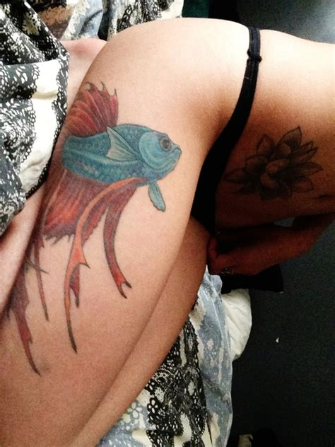 beta fish tattoo siamese fighting fish tattoos archives tattoou