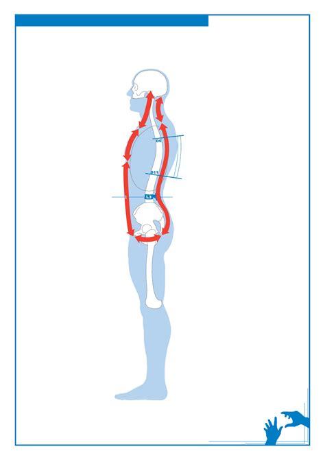 cadenas musculares anteriores kinesis neuromuscular