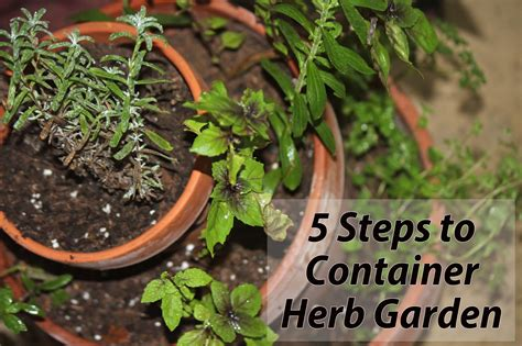 herb container garden to live in pensacola florida starting an herb
