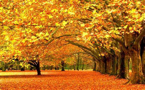trees, Fall, Nature Wallpapers HD / Desktop and Mobile ... Fall Nature Wallpaper