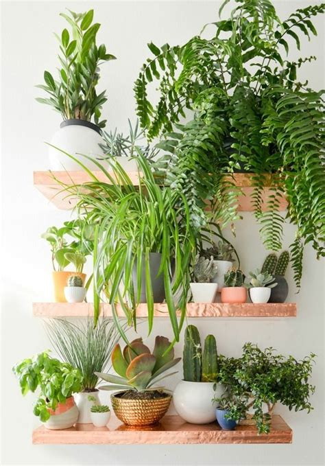 where to put plants in house 99 great ideas to display houseplants indoor plants