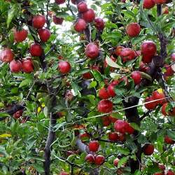 one tiny wish from gulmarg to apple gardens jammu kashmir