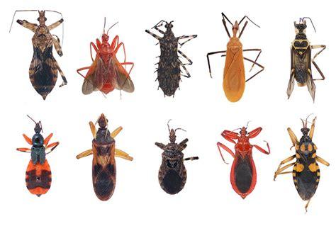 insetti volanti mostra di insetti fabrizio bosio