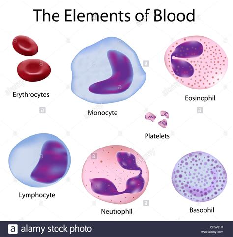 what color is blood inside the human the cells of human blood blood cells and different