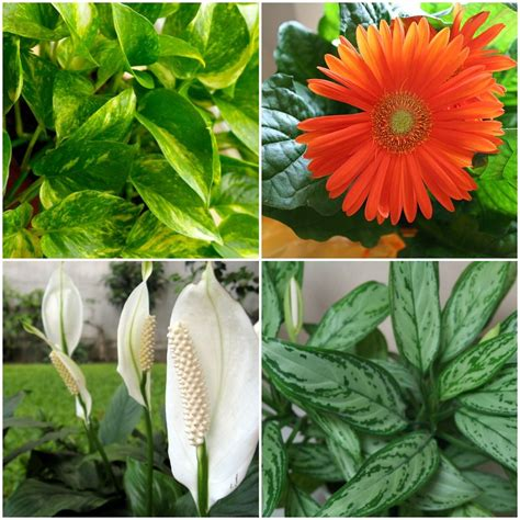 best plants a breath of fresh air 15 houseplants for improving indoor air quality mnn nature