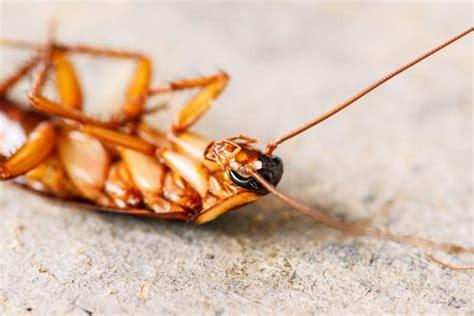 was tun gegen mücken in der wohnung was tun gegen insekten in der wohnung gesund leben