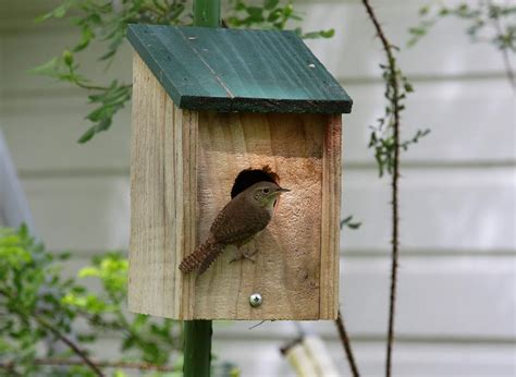 house wren bird carolina wren house plans 187 woodworktips