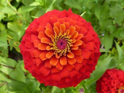 piante da fiore da giardino piante in fiore piante da giardino piante fiorite