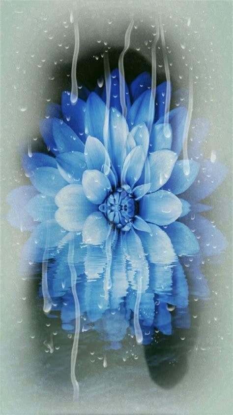 wallpaper karakter biru bunga biru wallpaper sc android