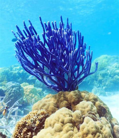 Coral Blue executive