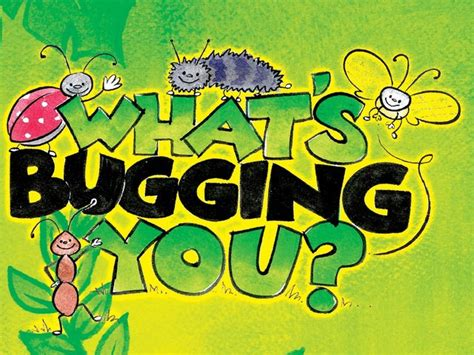 what s what s bugging you preschool series on vimeo