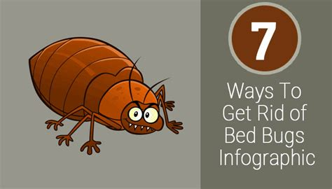 ways   rid  bed bugs infographic bestmattressesreviews