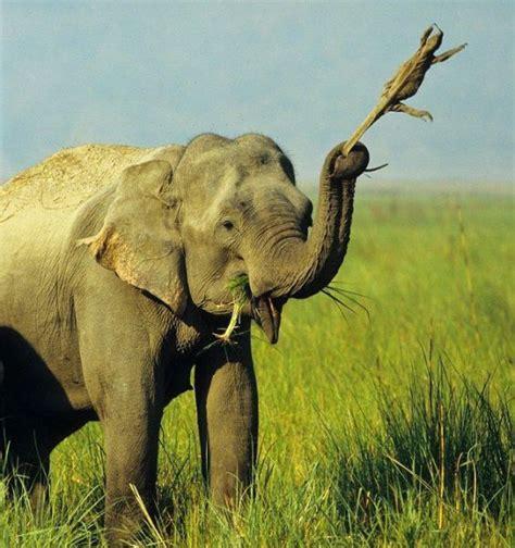 le elefant l elephant vs le varan d0wn