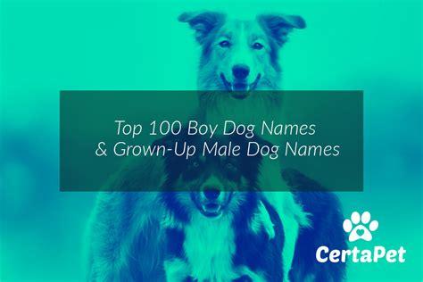 top  boy dog names  grown  male dog names certapet