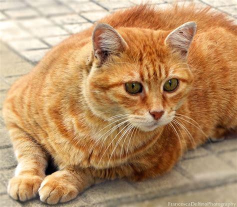 Image Gallery orangecat