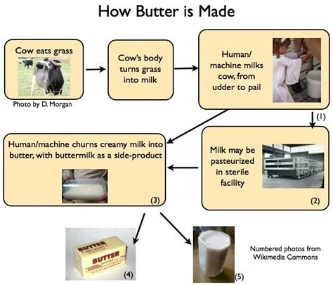 how is butter vs margarine 171 the essentialist