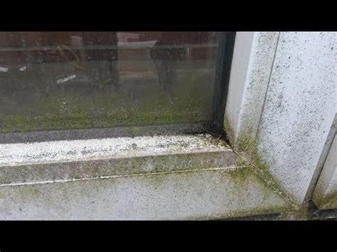 fensterbank reinigen insektendreck fensterrahmen fensterbank entfernen