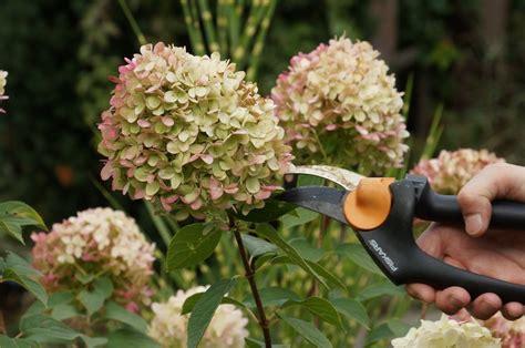 Hortensien Pflanzen Zeitpunkt 3851 by Wann Schneidet Hortensien Dekotipp Vom Profi