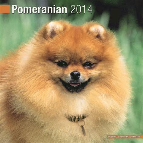 pomeranian calendar pomeranian calendar 2015 10060 15 pomeranian breeds