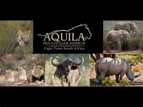 Aqilla Cape my day at aquila reserve safari cape town south africa