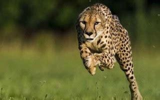 berbagai gambar hewan bergerak lucu kocak  gokil