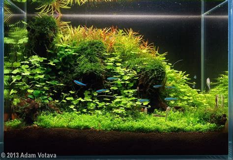 java moss aquascape 2013 aga aquascaping contest 564