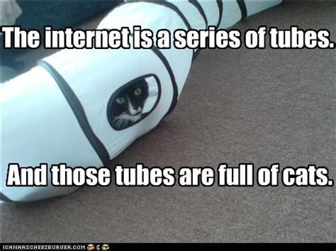 Tube Meme - the internet has helped cats