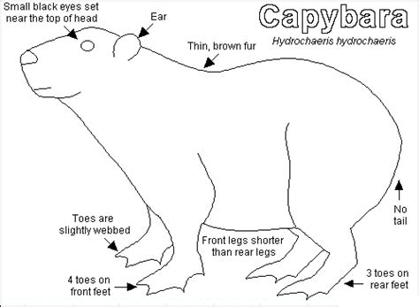 capybara coloring pages for kids