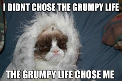 Grumpy Face Meme - the grumpy life grumpy cat know your meme