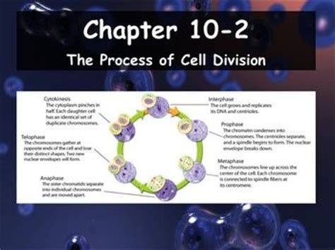 section 10 1 cell growth pages 241 243 chapter 10 cell growth and division worksheet answer key