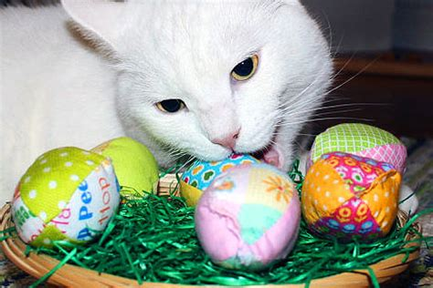 cat easter wallpaper easter fun page 47 easter fun pictures